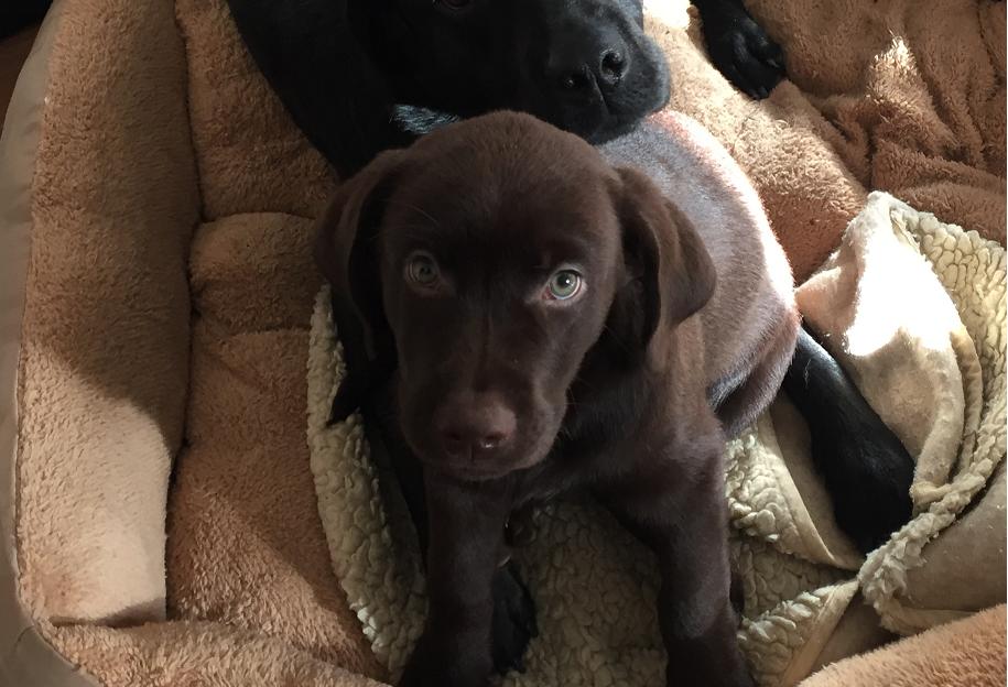 Gajo der neue Buerohund