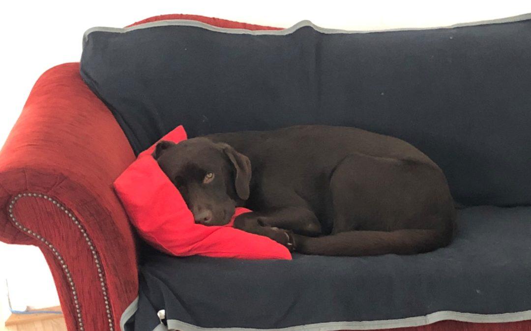 Nehmen Sie Ihren Hund mit ins Büro: Tiere im Büro – gut für die Seele, gut für das Unternehmen