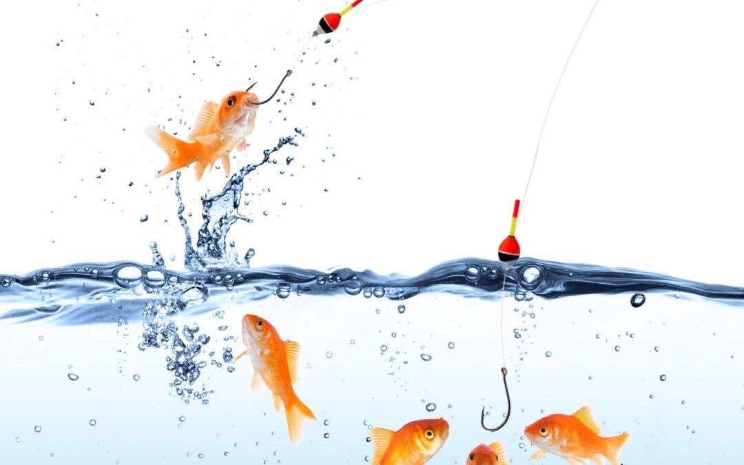 Kommentar: Der Köder muss dem Fisch schmecken und nicht dem Angler